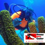 Review: Happy Dive Center, Dominican Republic